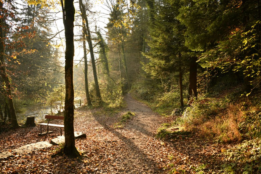Waldstück Eifel